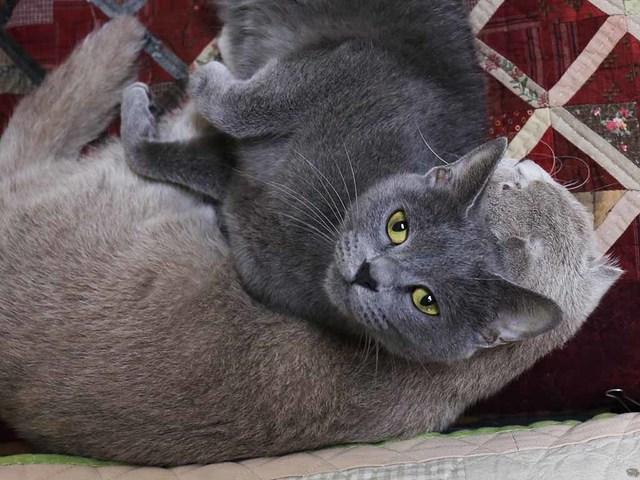 01_寄り添う猫達.jpg