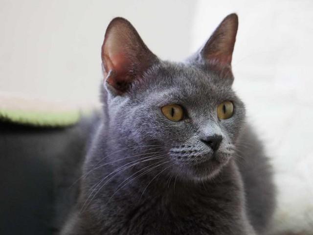 01_猫の耳.jpg