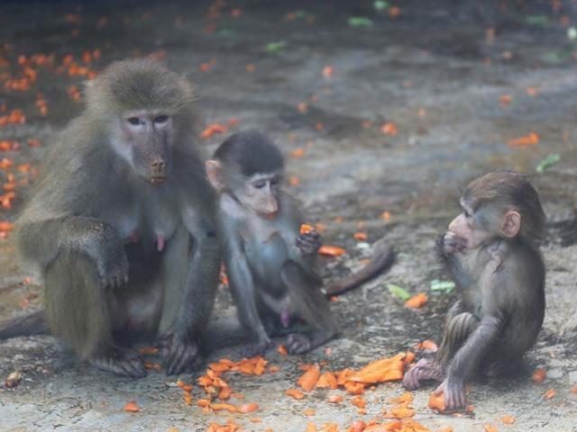 09_猿園母猿と子供達達.jpg