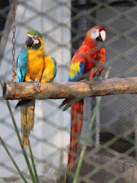 11_鳥園.jpg