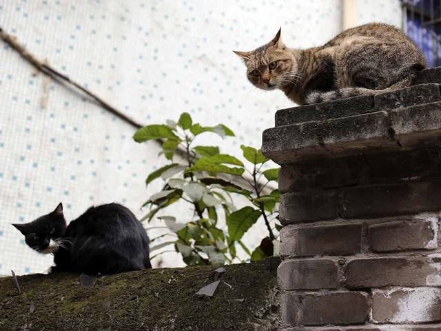 1_古いマンションの塀にて.jpg