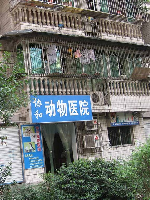 2_下町の犬猫病院.jpg