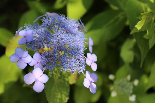 おがわ作小屋村の草花