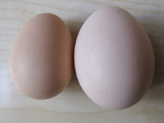 不揃いな卵たち